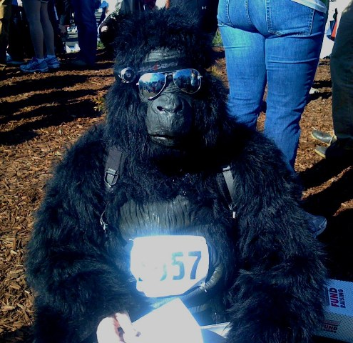 a-very-miserable-gorilla-resized