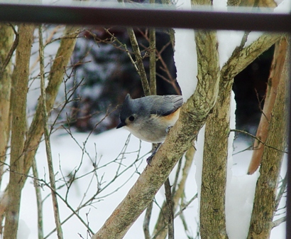 bird-outside-window-in-snow