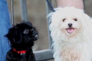 black-dog-white-dog-resized2