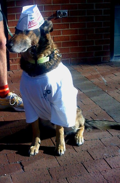 krispy-kreme-poster-dog-resized1