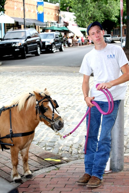 Boy with a tiny horse