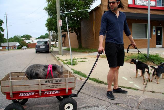 Piggy gone to market