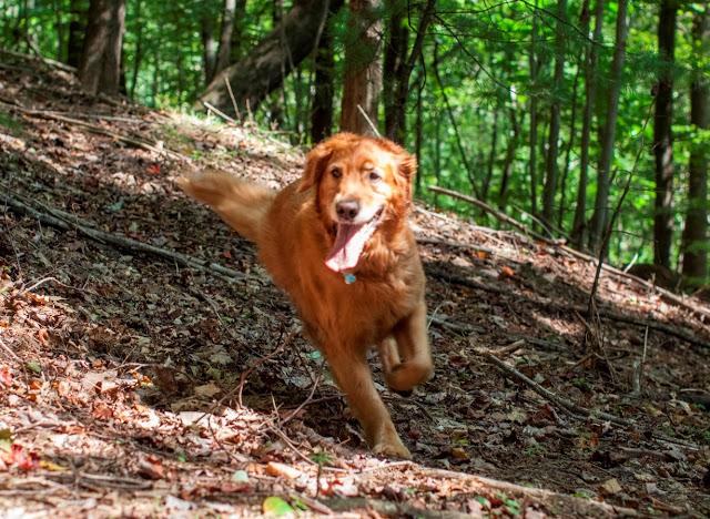 dudley running